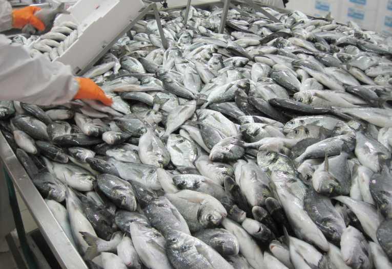 how-green-farmed-fish_712