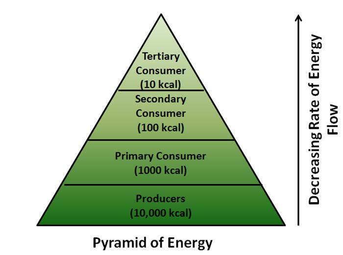 pyramid-of-energy